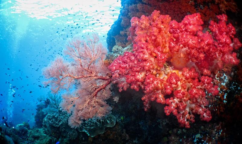 Coral Gardens 5