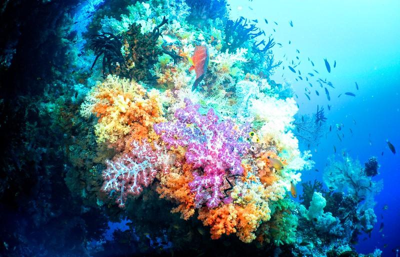 Coral Gardens 4
