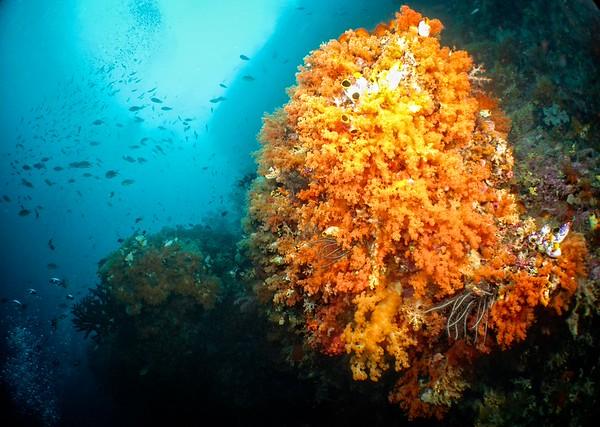 Coral Gardens 2