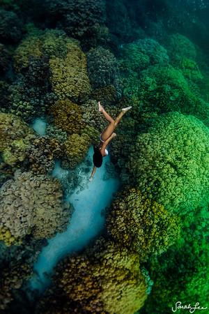 Coral Grove