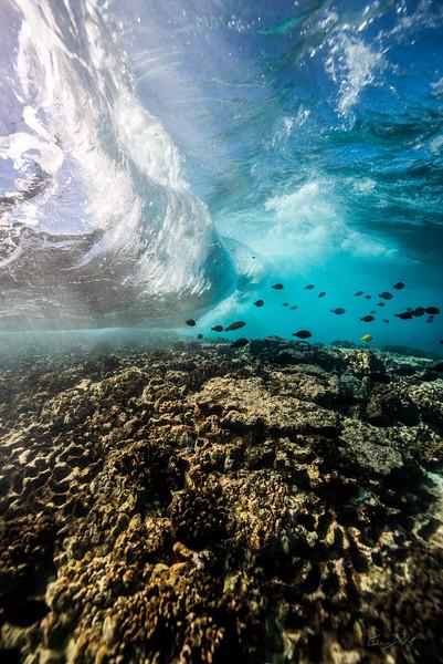 Two Step-Snorkeling-Hawaii-519