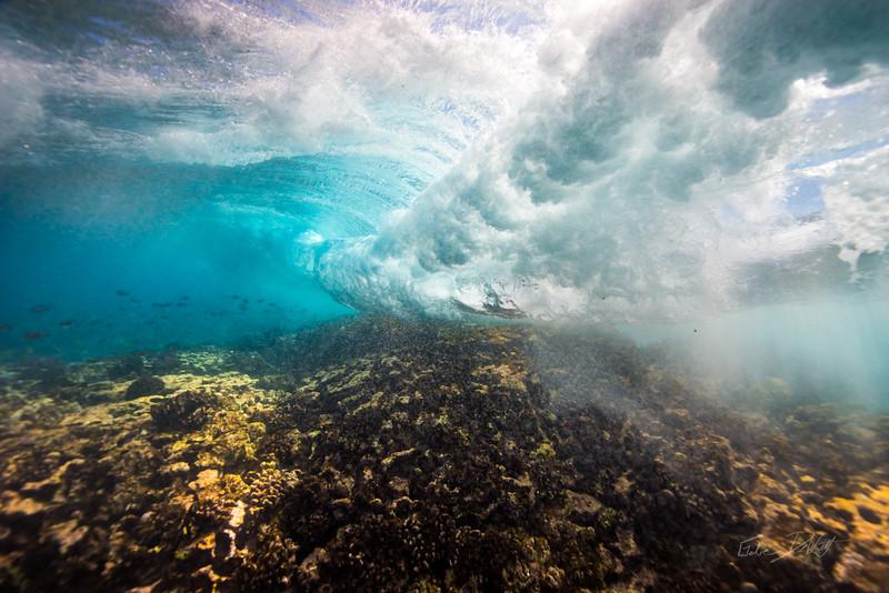 Two Step-Snorkeling-Hawaii-581