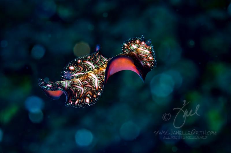 Magic Carpet Ride  ©2016  Janelle Orth