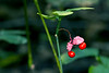 Berries of the Woods