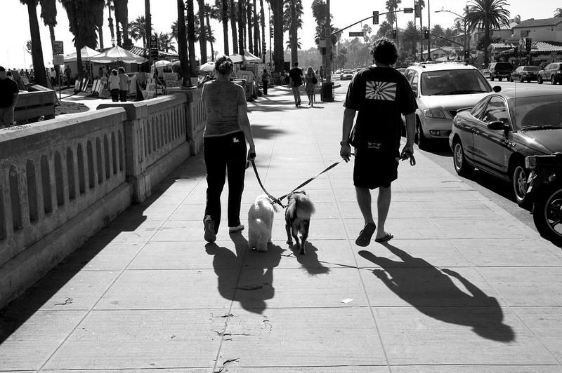 110_dogwalk
