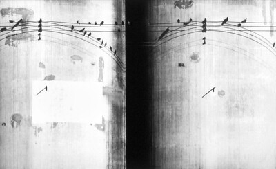 Birds on a Wire_print