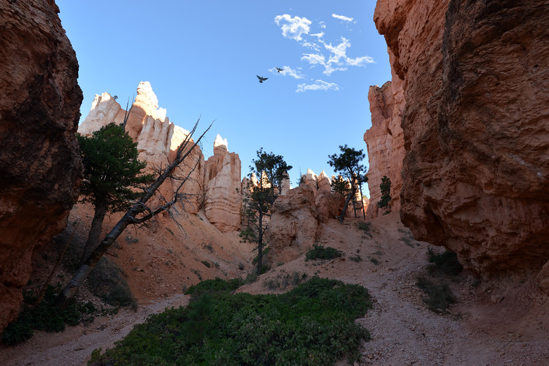 Bryce Canyon At The bottom