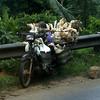 Ducks on the road to heaven - Dalat county, Vietnam. 17-05-09