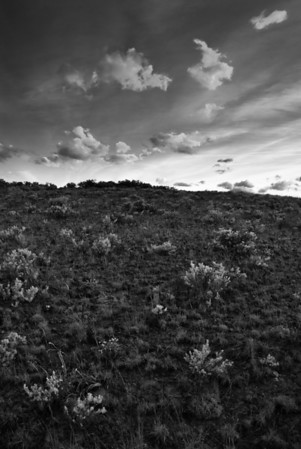Clouds of young sagebrush dot the landscape above Cowiche Canyon