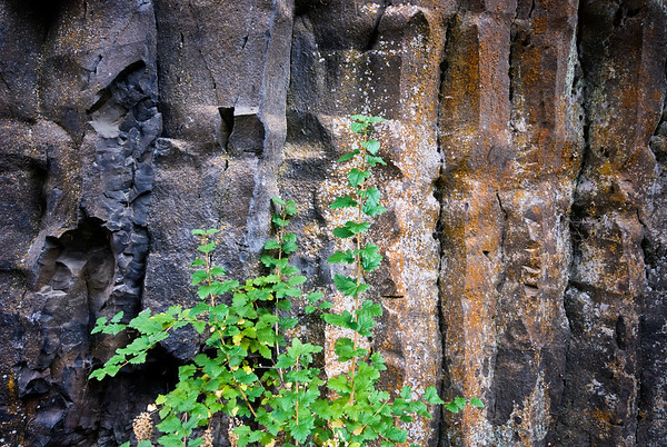 Rock wall by Umtanum Creek