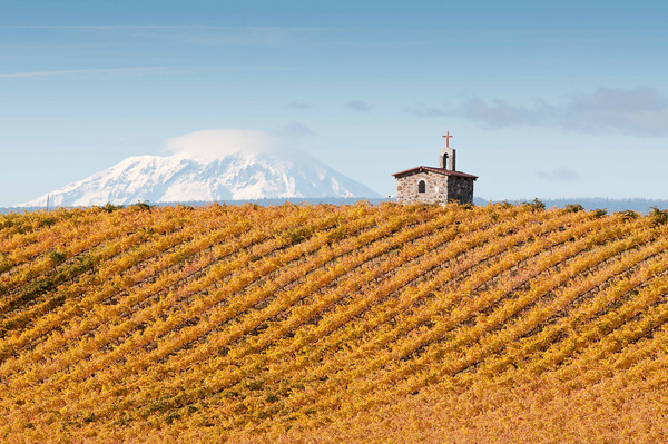 Fall Vineyard and Mt. Adams