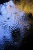 Water Skippers on Umtanum Creek