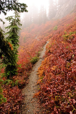 Mountain trail near the Cle Elum River