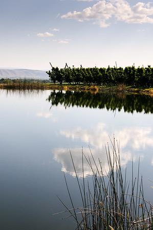 An orchard frost pond near Zillah, WA.  #4773