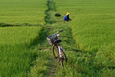 Worker in Rice Paddy, near Phong Nha Farmstay