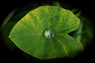 A drop of rain on leaf