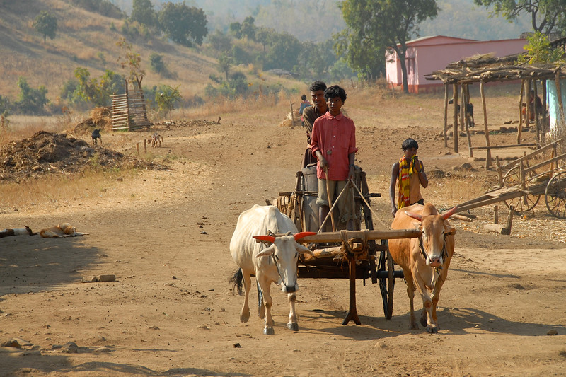 Transporting water on bullock carts to the village from the nearby stream.