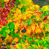Vineyard_Color_Riot-Nov132014_0011