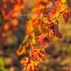 FallVineyard-Leal-Vertical1_Nov172014_0035