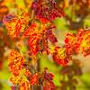 FallVineyard-Leal-Vertical2-_Nov172014_0061