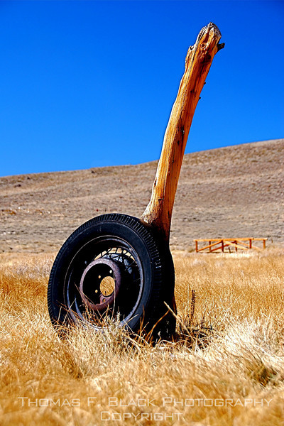 "Decades-old truck tire left resting against dead tree trunk, Bodie, CA. Now a ""ghost town,"" Bodie was once a booming mining town in late 1800s. Last of residents turned out the lights for keeps in 1938. [UFP 101109]"