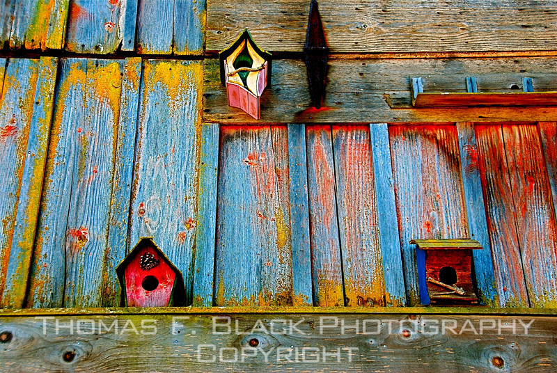Bird houses mounted on front wall of old barn, Whatcom Co., WA, near Bellingham. [UFP 082909]