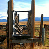 Roadside cattle chute, Hwy. A23, Plumas County, CA., roughly hour's drive north of Truckee. [UFP 111009]