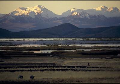 Crops along the lake shore, 2000.