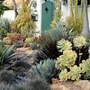 Spanish style California friendly succulent garden