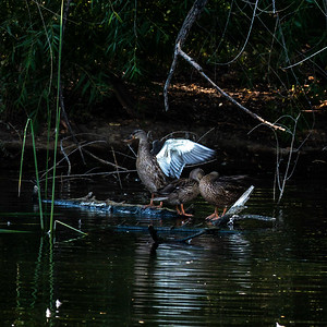9-ChrisW-Sweetwater-Wetlands-3699
