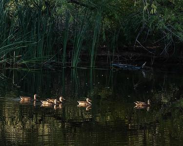7-ChrisW-Sweetwater-Wetlands-3652
