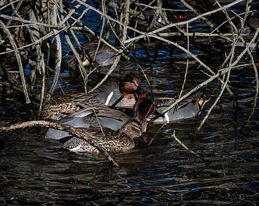6-ChrisW-Sweetwater Wetlands-7533