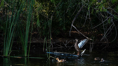 8-ChrisW-Sweetwater-Wetlands-3683