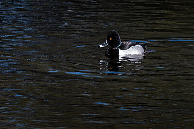 3-ChrisW-Sweetwater Wetlands-7482