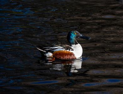 5-ChrisW-Sweetwater Wetlands-7569-2