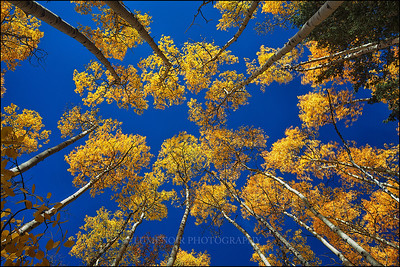 Fall Colors of Colorado.