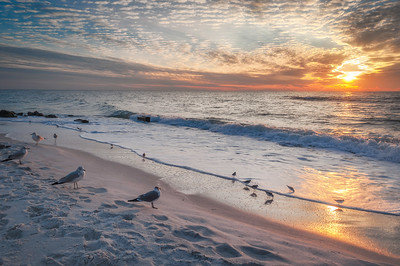 Naples Sunset Watched By Seagulls