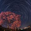 わに塚の桜 2:00AM