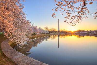 Morning Blossom