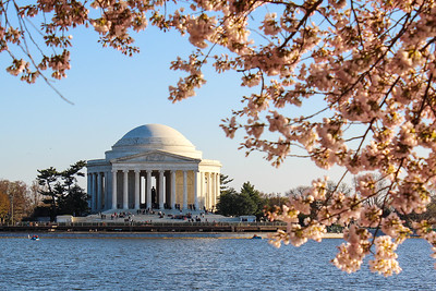 National Cherry Blossom Festival: Jefferon Memorial