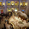 Rotunda Bustle, Smithsonian Natural History Museum - Washington DC