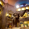 Elephant Centerpiece, Smithsonian Natural History Museum - Washington DC