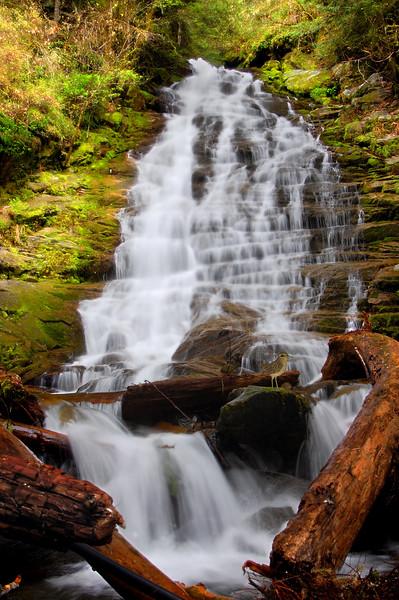 Lower Hopkins Falls