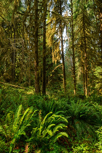 Hoh Rain Forest, Olympic National Park, Washington