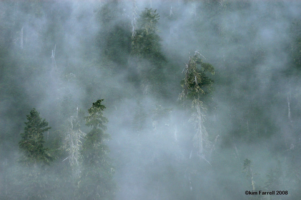 Mist.  Olympic National Park.
