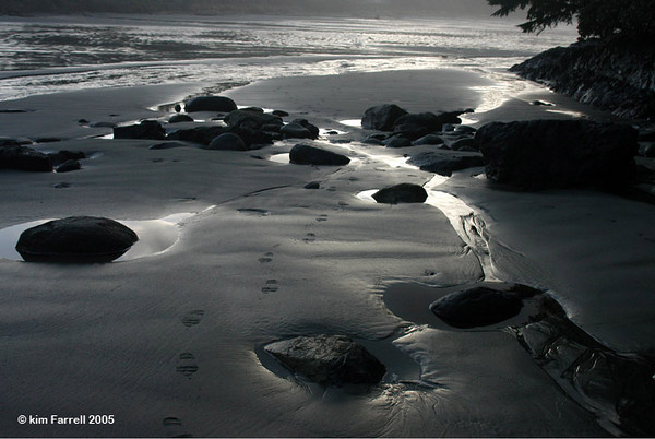 Footsteps.  Vancouver Island, B.C.