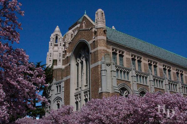 University of Washington Suzzallo Library in the spring.