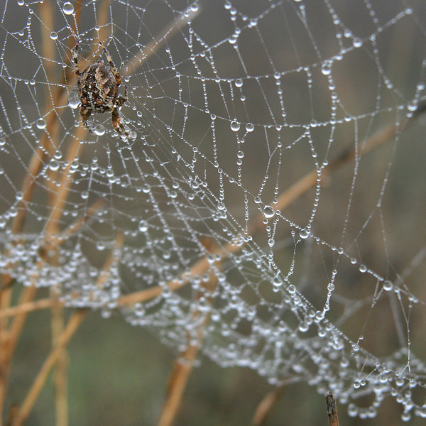 7604 Spider Drops Web