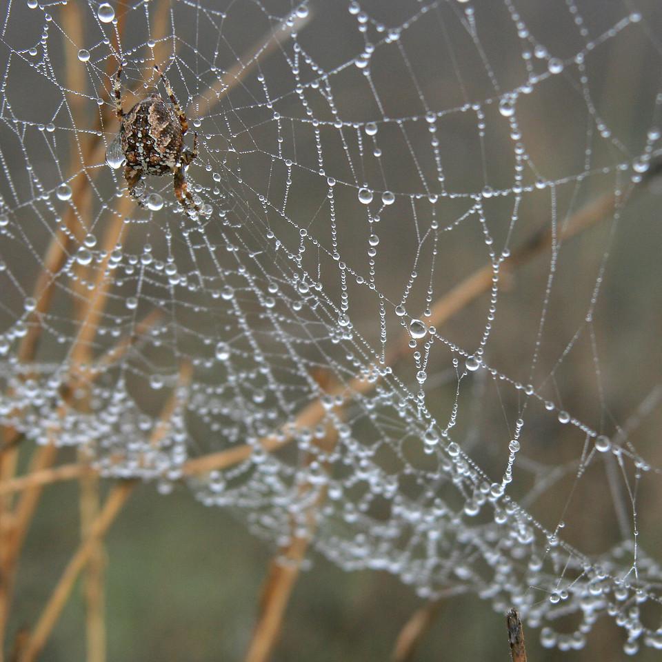 7604 Spider Drops Web