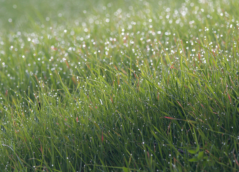 Drops on Grass 4116